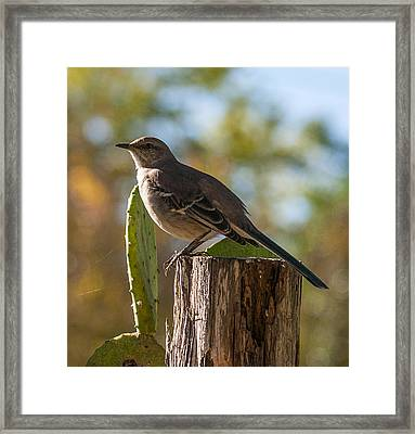 Bird On A Post Framed Print