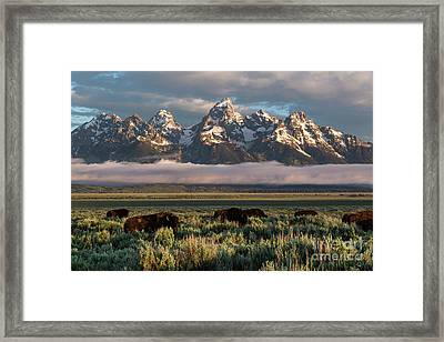 Bison Below Teton Mountains Framed Print