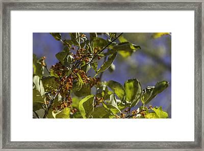 Bittersweet Framed Print