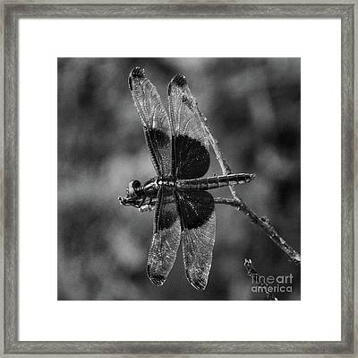 Black And White Dragon Framed Print by Skip Willits