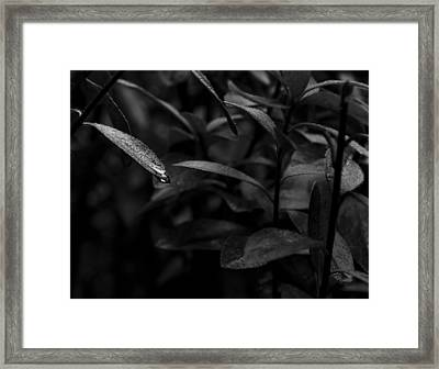 Black And White Leaf Raindrop Framed Print by Jeremy Raines