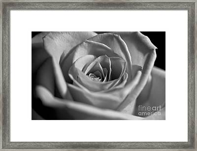 Framed Print featuring the photograph Black And White Rose by Micah May
