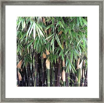 Black Bamboo Framed Print by Mary Deal
