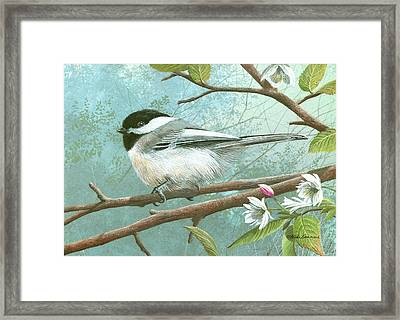 Black Cap Chickadee Framed Print