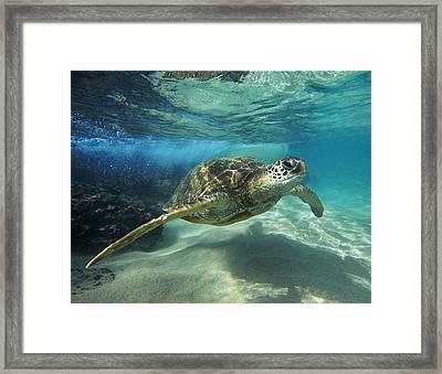 Black Rock Turtle Framed Print by James Roemmling