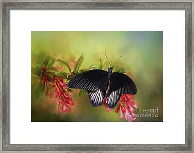 Black Velvet Framed Print by Eva Lechner