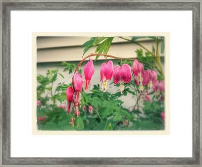 Bleeding Heart's  Framed Print