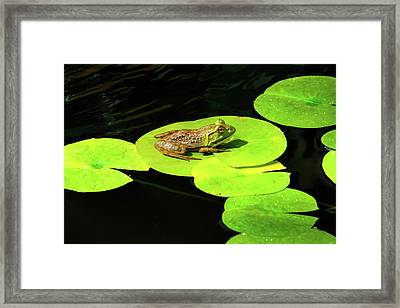 Framed Print featuring the photograph Blending In by Greg Fortier