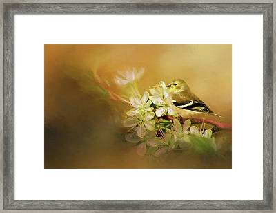 Blooming Finch Framed Print