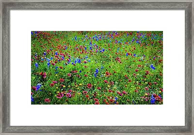 Blooming Wildflowers 537 Framed Print