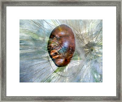 Blowing Dandelions Framed Print