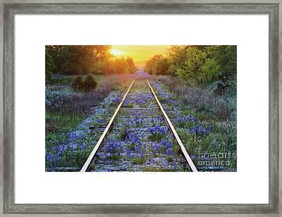 Blue Bonnets On Railroad Tracks Framed Print by Jeremy Woodhouse