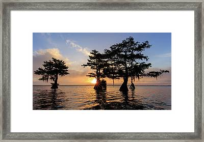 Blue Cypress Lake Morning Framed Print