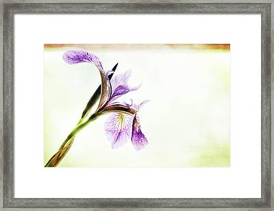 Blue Flag Framed Print
