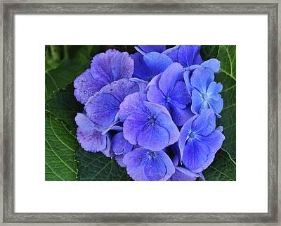Blue Flower Framed Print by JAMART Photography