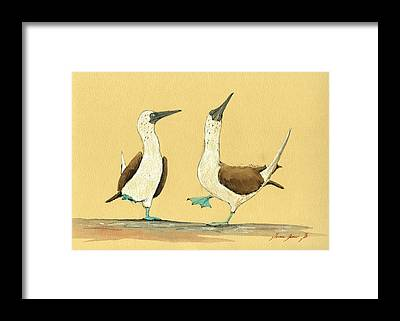 Blue Footed Booby Framed Prints