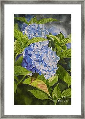 Blue Hydrangea Framed Print by Sharon Freeman