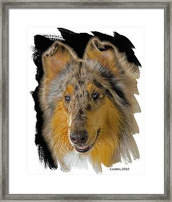 Blue Sable Standard Collie Framed Print by Larry Linton