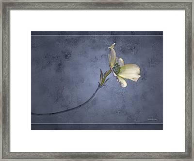 Blue Spring Framed Print by Ron Jones