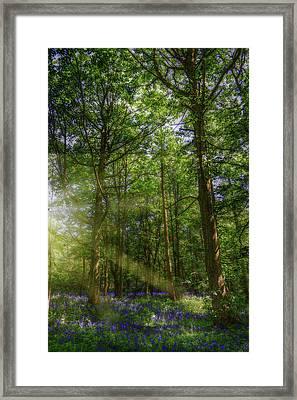 Bluebell Forest Framed Print