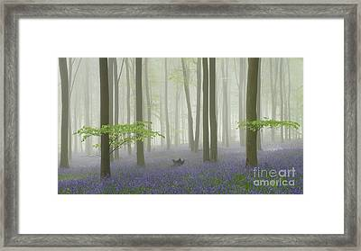 Bluebell Mist I Framed Print by Richard Thomas