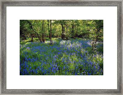 Bluebells In The New Forest Framed Print by Joana Kruse