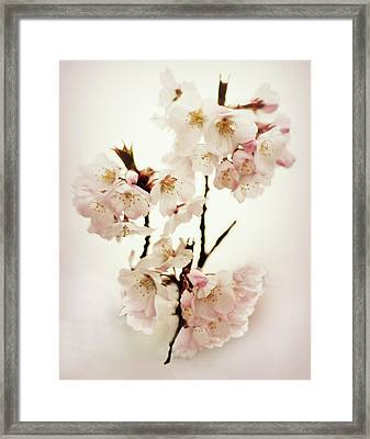 Framed Print featuring the photograph Blushing Blossom by Jessica Jenney