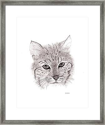 Bobcat Framed Print by Ed Einboden