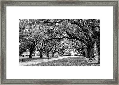 Boone Hall Plantation Avenue Of Oaks Mount Pleasant South Carolina Framed Print by Dawna  Moore Photography