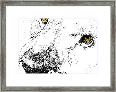 Born Wild And Free Framed Print by JAMART Photography
