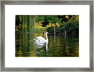 Boston Public Garden Swan Green Reflection Framed Print by Toby McGuire