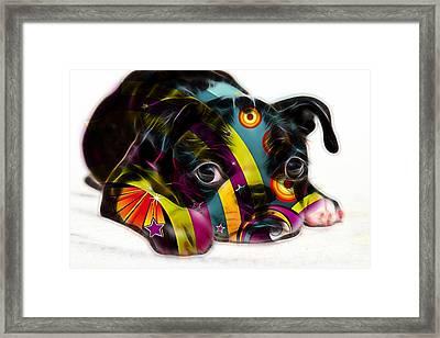 Boston Terrier Puppy Framed Print by Marvin Blaine
