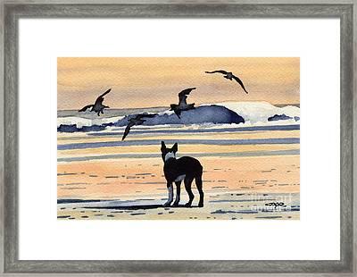 Boston Terrier Sunset Framed Print