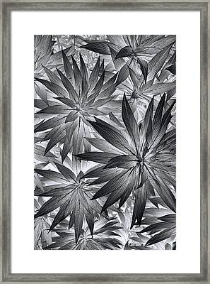 Framed Print featuring the photograph Botanical by Wayne Sherriff