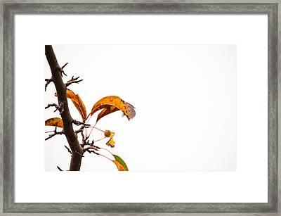 Branch Of Autumn Framed Print by Karol Livote