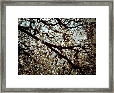 Framed Print featuring the photograph Branch One by Lucian Capellaro