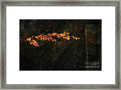 Branch Framed Print by Svetlana Sewell