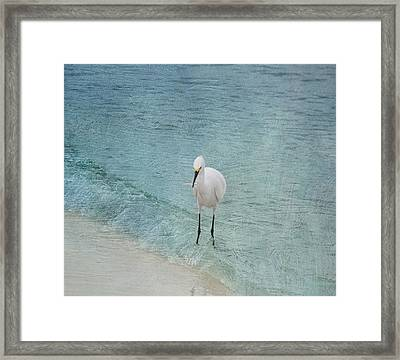 Breakfast Time Framed Print by Kim Hojnacki