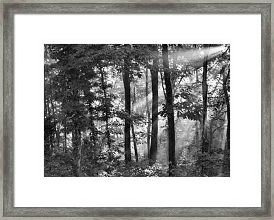 Breaking Through The Canopy Framed Print