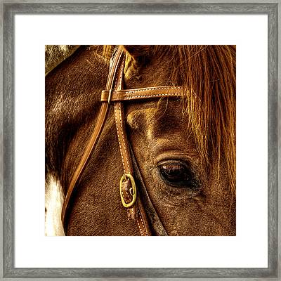 Bridled Framed Print by David Patterson