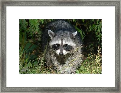 Bright Eyes Framed Print by Fraida Gutovich