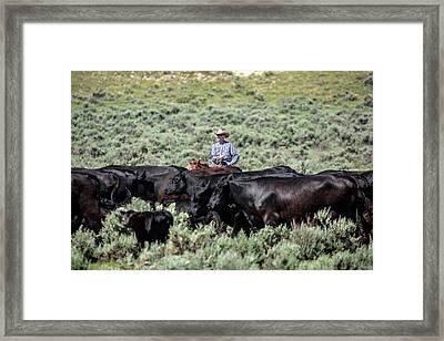 Bringing In The Herd Framed Print by Todd Klassy