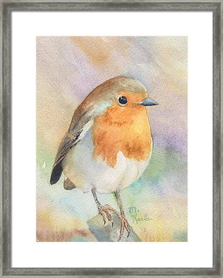 British Robin Framed Print