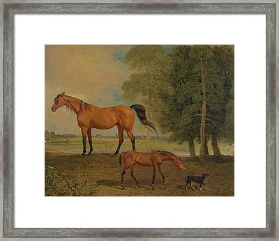 Broodmare With Foal, And A Terrier Framed Print