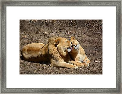 Brotherly Love Framed Print by Mike Martin