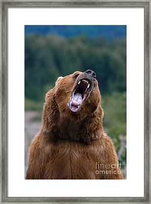 Brown Bear Framed Print by John Hyde - Printscapes