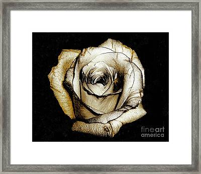 Brown Rose - Digital Painting Framed Print by Merton Allen