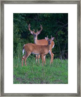 Buck Father And Son Framed Print