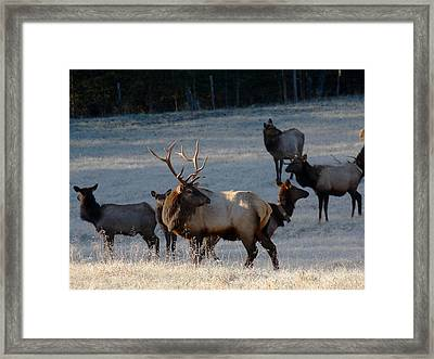 Framed Print featuring the photograph Bull Elk In Frost  by Michael Dougherty