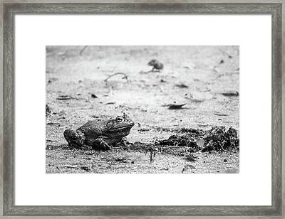 Framed Print featuring the photograph Bull Frog by Jason Smith